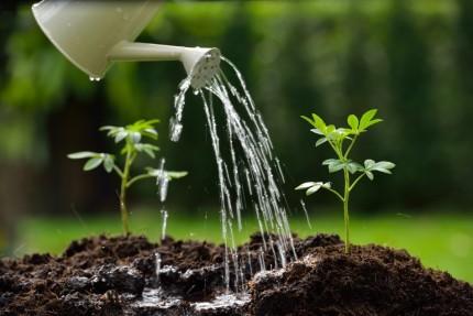 ¿CUANTA AGUA NECESITAN MIS PLANTAS?