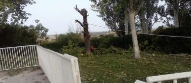 Apeo de árboles